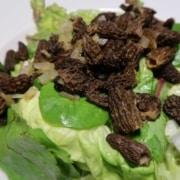 Salat mit Morcheln